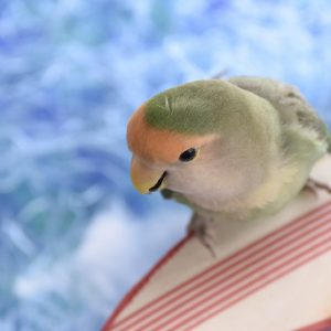 インコさんが好きな素材を集めて、真夏のサーフィンを表現しました。