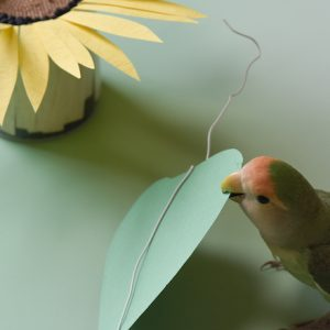 インコのおとちゃんが、ひまわりの花壇をかわいく荒らしました。