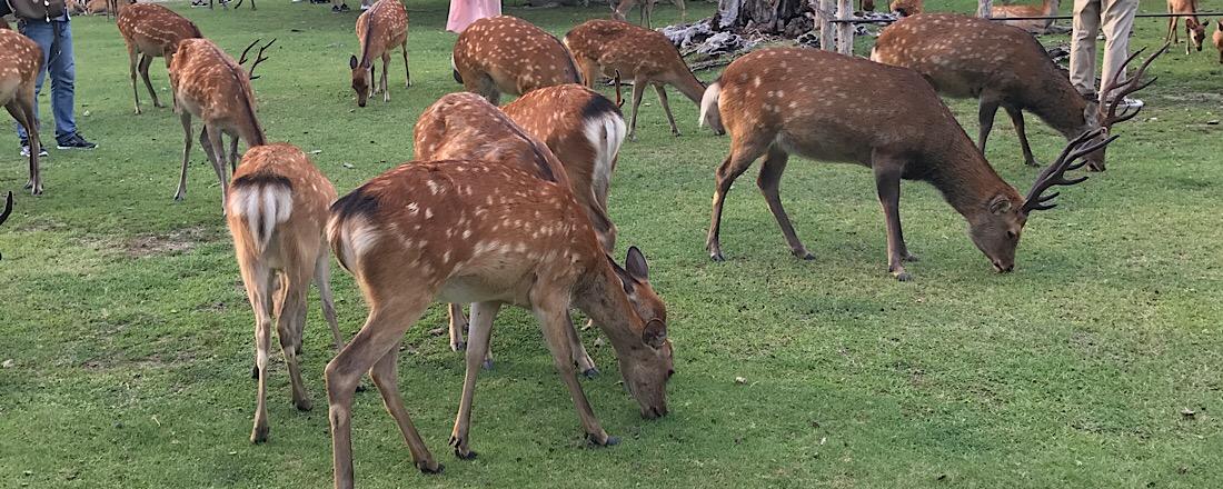 鹿と仲良くなりたい。