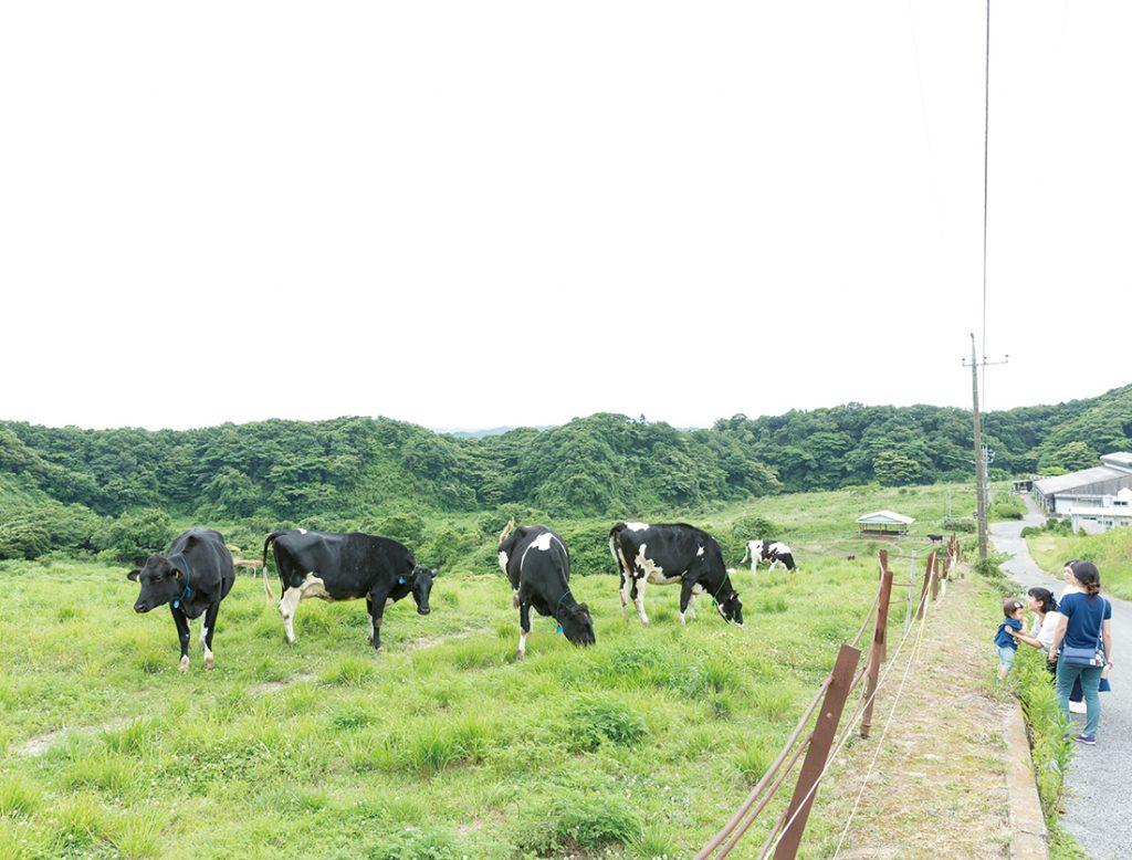 高秀牧場 ミルク工房