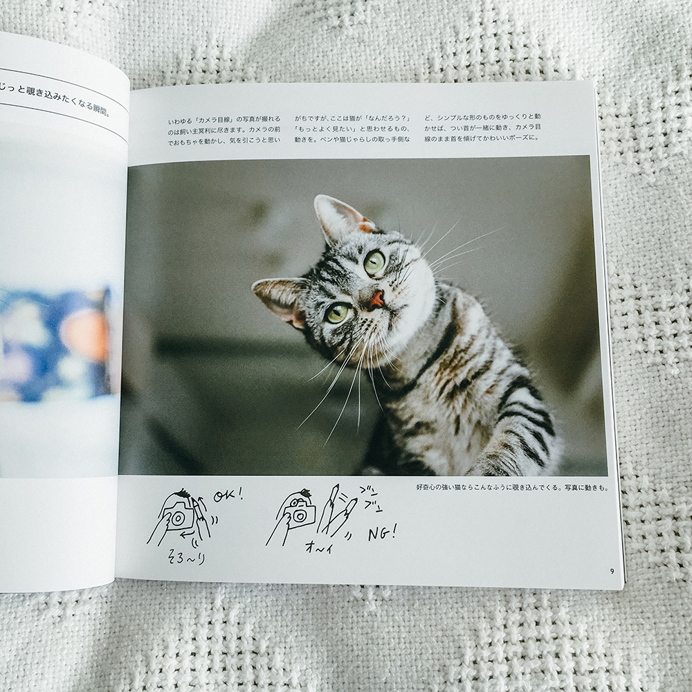 猫の撮リセツ