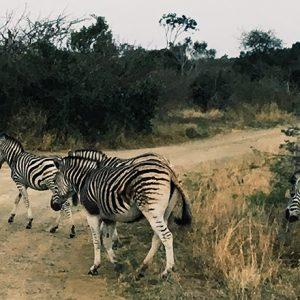 南アフリカを楽しみ尽くす~第二回~