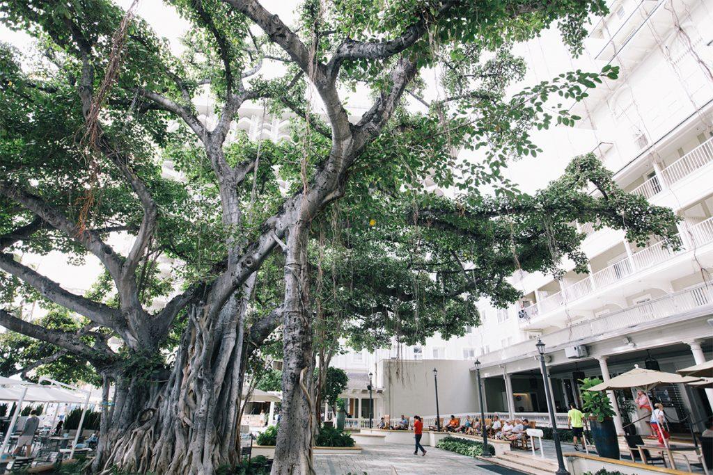 中庭のバニヤンツリー。