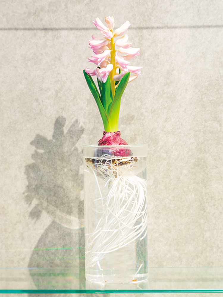 ヒヤシンスやチューリップなど球根植物の水栽培ができる花器。花の美しさと同時に根の成長を楽しめる。2,800円