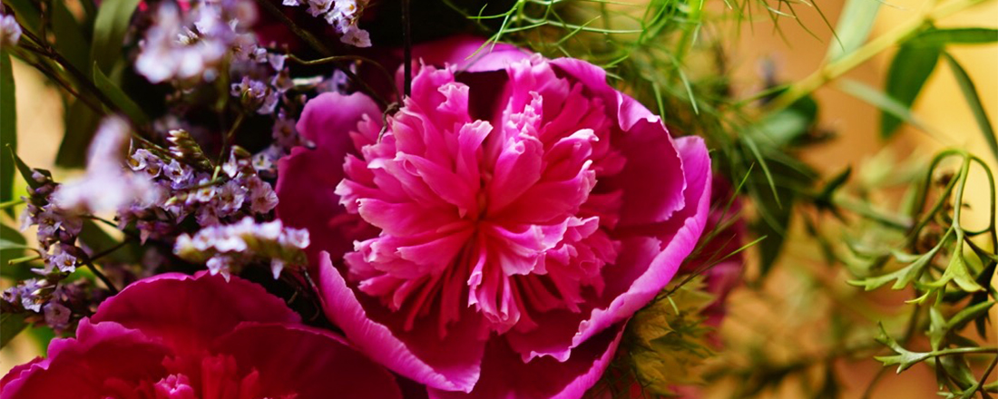 いま楽しめる!初夏の花「芍薬」の早咲き品種「さつき」が小ぶりで可愛らしい
