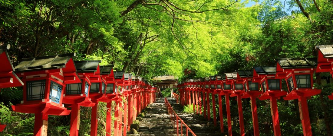 美しい新緑の青もみじと古都の風情に酔いしれる!初夏の京都で青もみじ神社めぐり。