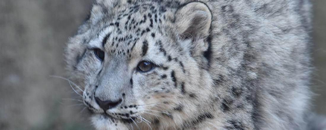 いま会いに行きたい!東京の動物園・水族館のかわいい赤ちゃん動物6匹