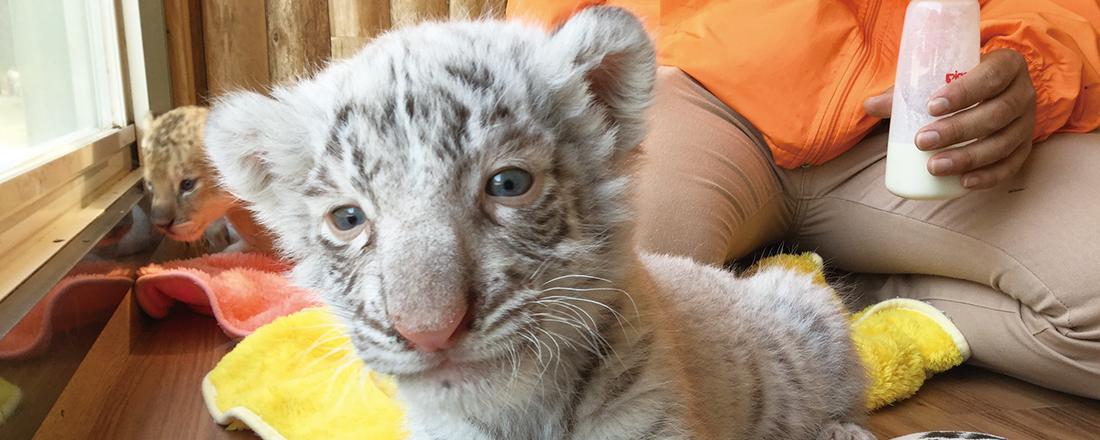 胸きゅん必至!全国の動物園のかわいい赤ちゃん動物4選