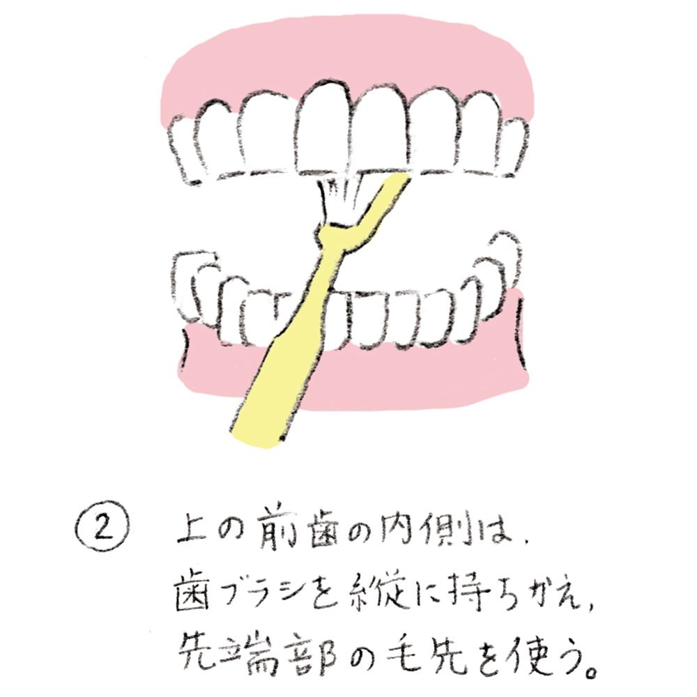 dental_brushing02_u