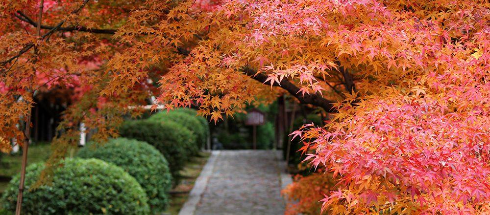 """""""もうひとつの京都""""、穴場絶景スポットをめぐる!ーお茶の京都、竹の里・乙訓編ー"""