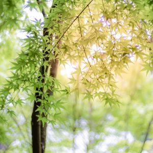 #広島県のシンボル #紅葉の頃にまた行きたい