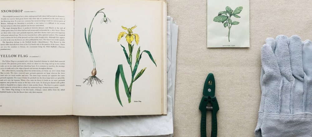 スタイリスト長坂磨莉の「HELLO!GOOD THINGS」vol.11 コンパクトさも魅力、巧みなつくりの剪定ばさみ。