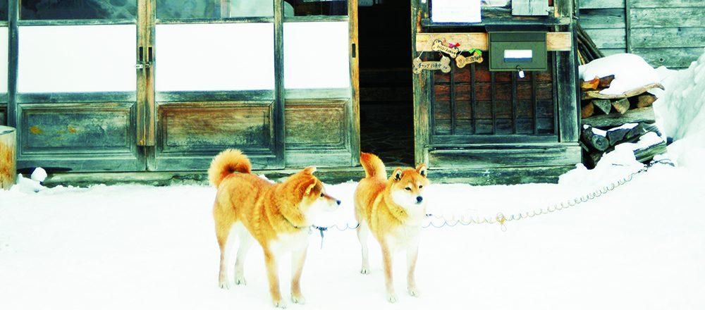 看板犬・猫に癒される!栃木・日光沢温泉、群馬・赤城温泉の人気温泉宿へ。