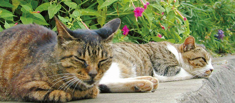 【完全保存版】ネコ好きの聖地・鎌倉〜江ノ島で出あった、かわいい猫たち。