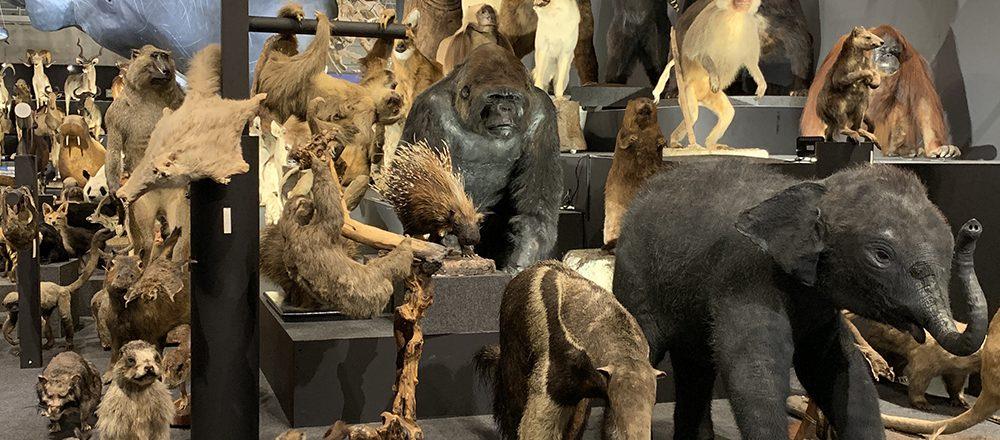 〜今度はどの美術館へ?アートのいろは〜「大哺乳類展2-みんなの生き残り作戦」