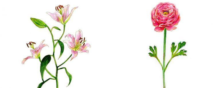 【完全保存版】愛や幸福、感謝…春の花15種に込められた花言葉まとめ。