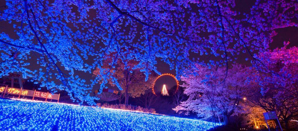 〈さがみ湖プレジャーフォレスト〉で『桜まつり』開催。夜桜とイルミネーションでお花見!