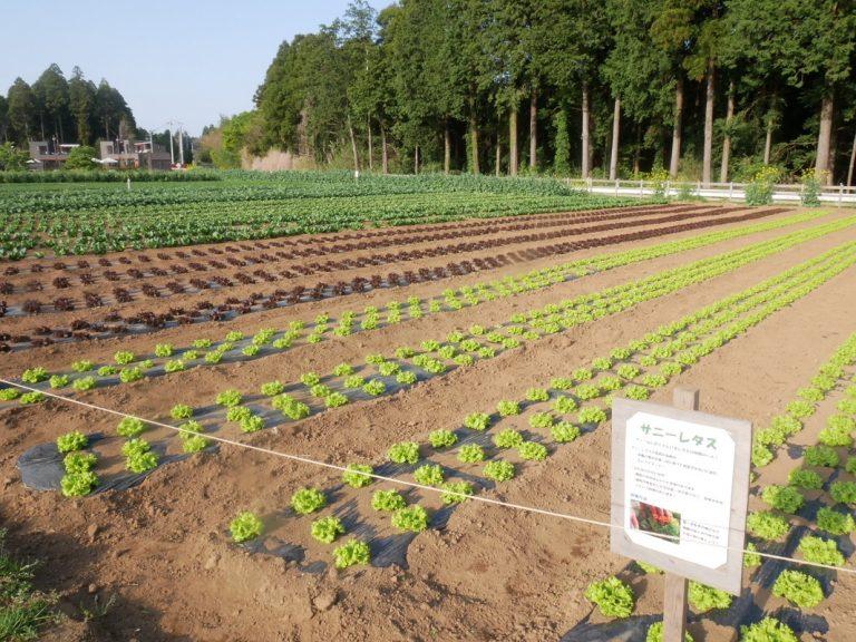 千葉県香取市〈THE FARM〉