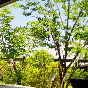 緑に癒される休日を。四季折々の季節で楽しめる「植物園」の魅力と楽しみ方。