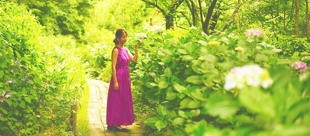 憂鬱な梅雨を彩ってくれる「紫陽花」の楽しみ方。