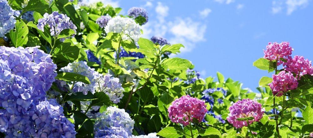 鎌倉の隠れた名所〈瑞泉寺〉で、家族と紫陽花巡りへ。