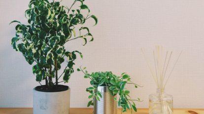5月末に引っ越した際、「この家に足りないものは緑だ!」と思い立って観葉植物を育ててみることに。まずは、南青山にある〈SOLSO PARK〉でベンジャミンシタシオンとディスキディアを購入しました。次に狙っているのは、「嬉しい便り」という花言葉を持つモンステラ。まさにそんな便りが舞い込むような、ハッピーな日々を送りたいです。 / ハナコラボ with いち髪 Hanako Lab. with Ichikami