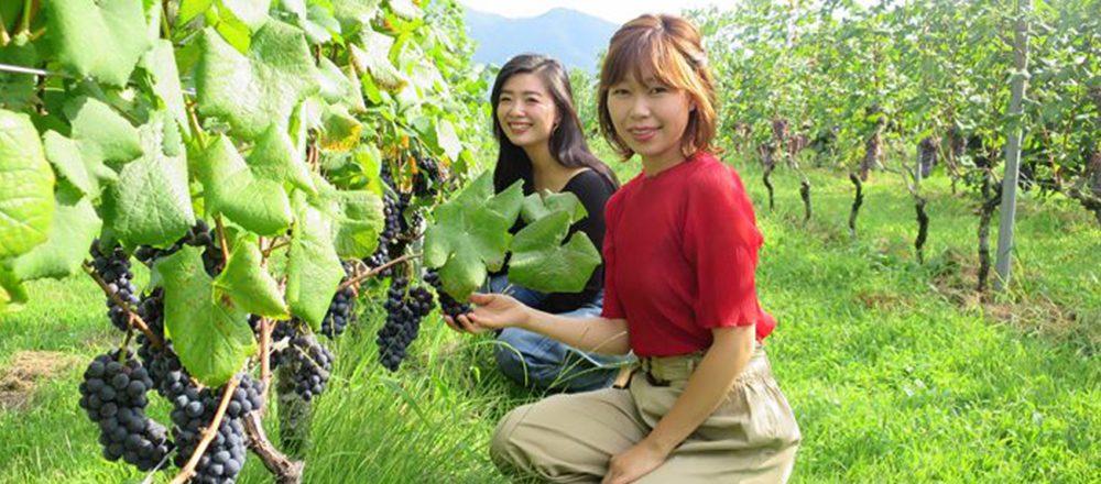 ワインを楽しく学ぶなら。夏の旅行で訪れたい全国の名ワイナリー3選!