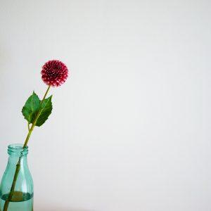 一輪で飾っても可愛い、秋のお花「ダリア」の飾り方。