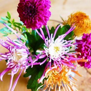 秋は菊の花がおすすめ。菊のおしゃれな飾り方やアレンジ、長持ちの秘訣をご紹介。