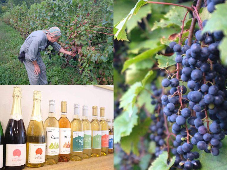 代表の亀和田さんと〈八剣山ワイナリー〉で作られたワイン。ぶどうは品種によって味が全く違う