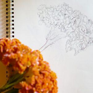 秋の大人の自由研究。「フラワーデッサン」でお花を愛でよう。