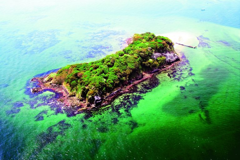 Sense Island