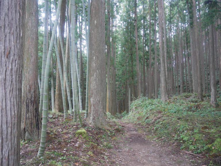 kumanokodou75