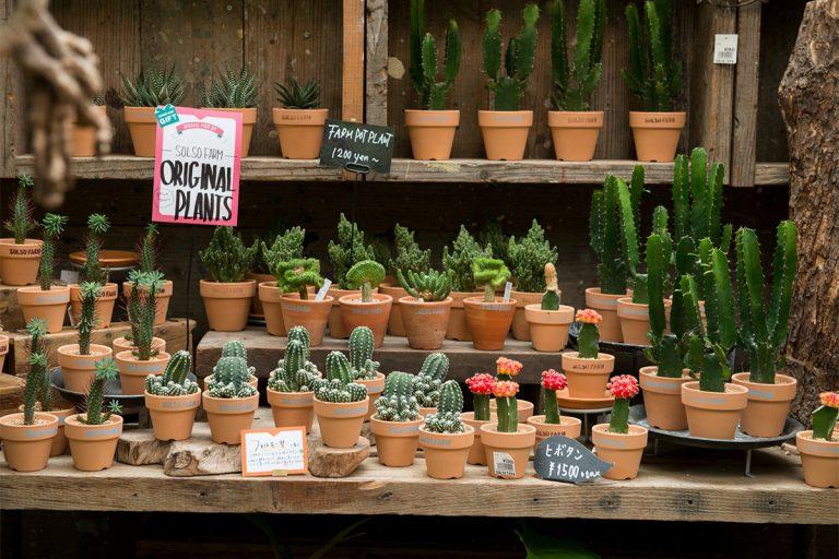 SOLSOオリジナルの多肉植物なども販売。贈り物にも最適。