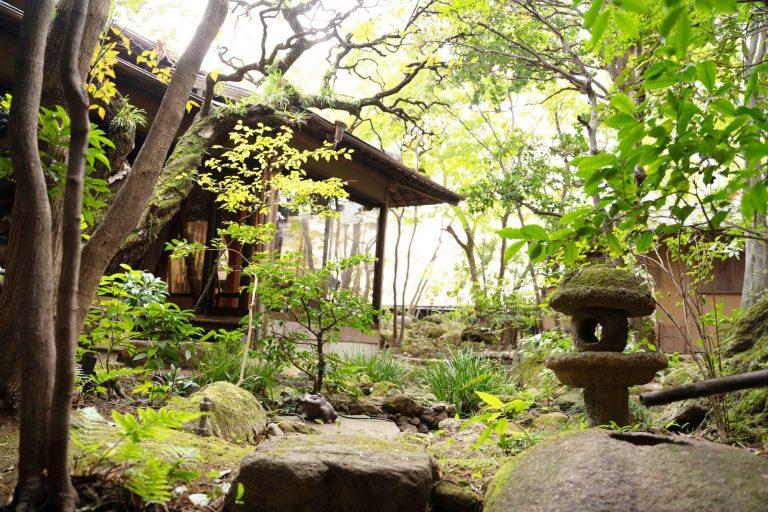 〈和多伴〉の創業時から丁寧に手入れされてきた日本庭園。