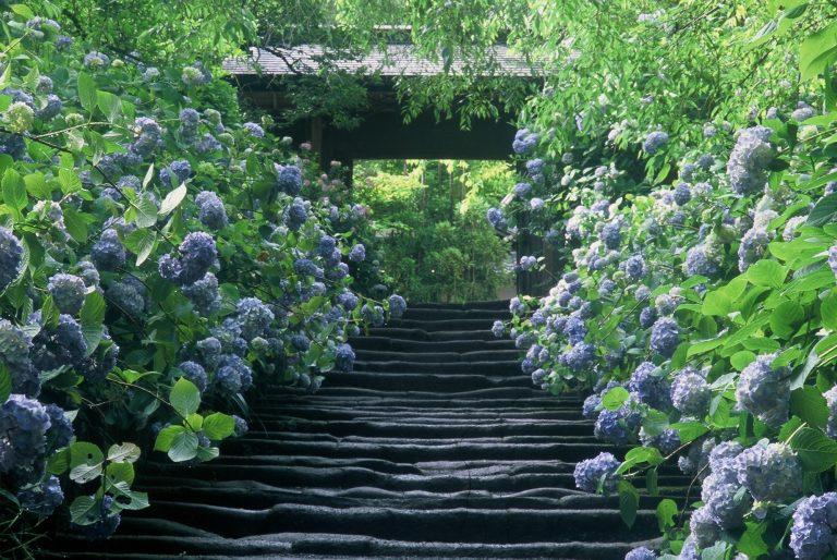 明月院 神奈川