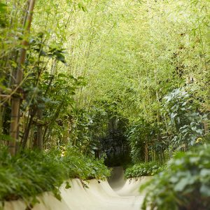 大楠へ続く小路は『となりのトトロ』をイメージしたそう。風に葉がさざめく音を聞きながら一歩ずつご神木への期待が高まる。