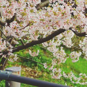 子どもと巡る、家から半径3kmの世界。春の気配が咲き始める鎌倉へ