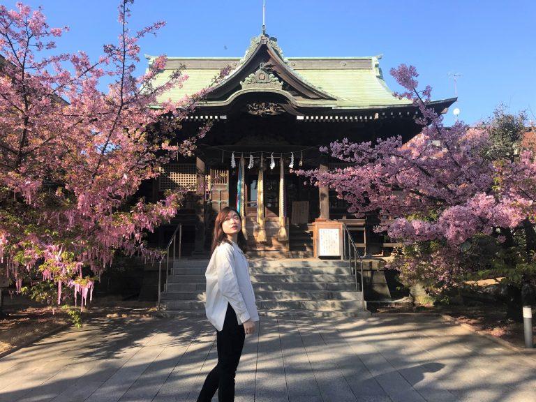 桜神宮¥写真2