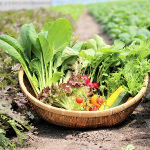 完全無農薬有機栽培!身体が喜ぶ、〈サガンベジ〉の新鮮野菜をおうちにお取り寄せ。