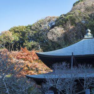 〈明月院〉/北鎌倉