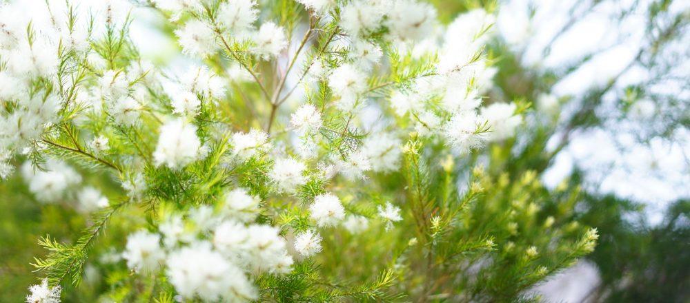 本格的な夏が始まる前に「植物のためにすると良いことって?」。子どもと一緒に夏支度を。