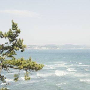 海を見下ろせる稲村ヶ崎公園はローカルにも人気。松と海越しの江の島などもかっこいい。