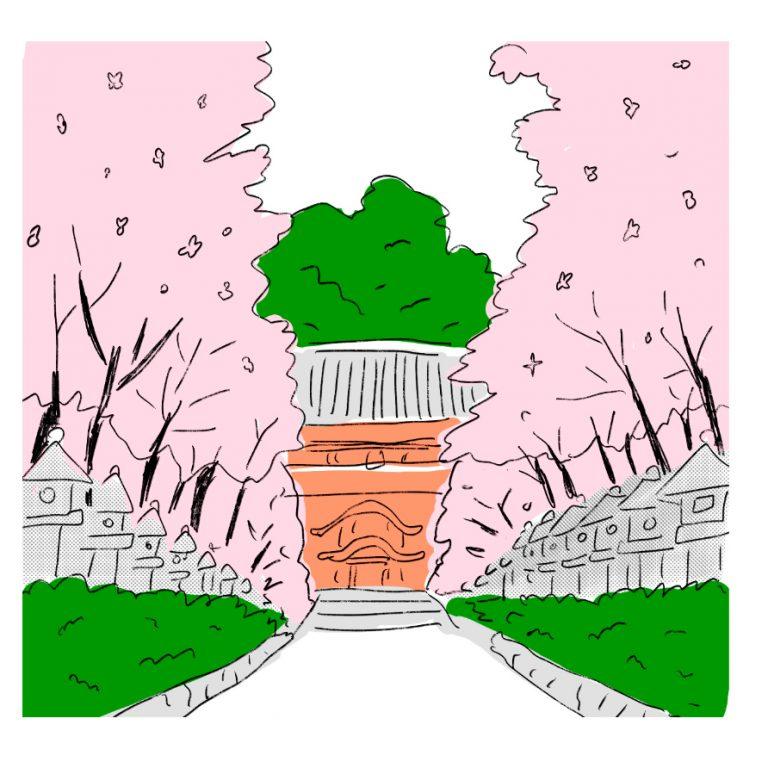 段葛の桜並木