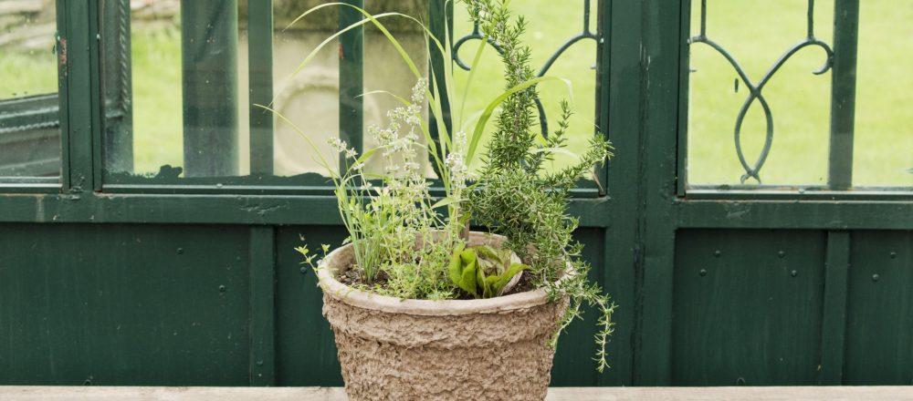 今回は、土に還る再生紙でできたエコ鉢を使用。「お庭がある人は、鉢のまま2/3くらいまで土に植えてしまえば周囲の土が水分量をコントロールしてくれて、より管理が楽チン」と杉井さん。