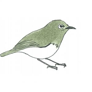 自宅、公園で始められる!癒し×学びの野鳥観察「バードウォッチング」のススメ。