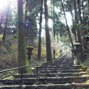 浄土院へと繋がる石段。境内には勾配の険しい道も多い。