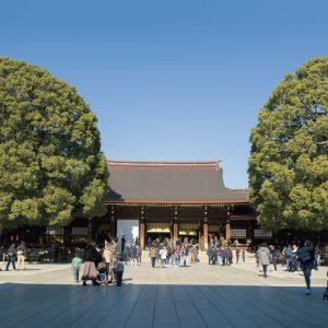 「ご社殿」に向かって左手には仲睦まじく寄り添うように立つ2本の楠「夫婦楠」がある。明治神宮が鎮座した大正9年以来、戦災もまぬがれ、拝殿前で多くの参拝者を迎えている。