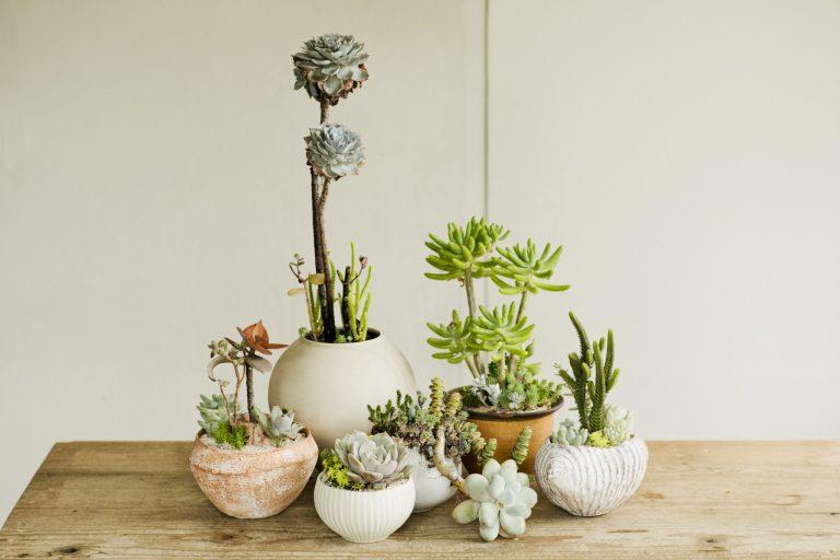 アトリエには大小様々な器が並ぶ。「TOKIIROにとって作家の器はなくてはならない存在。多肉植物が色彩なら、鉢は世界観を描くキャンバスのようなもの」