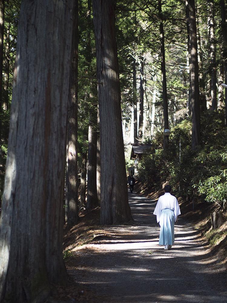 拝殿から「えんむすびの木」までの参道は高い杉並木を歩く。